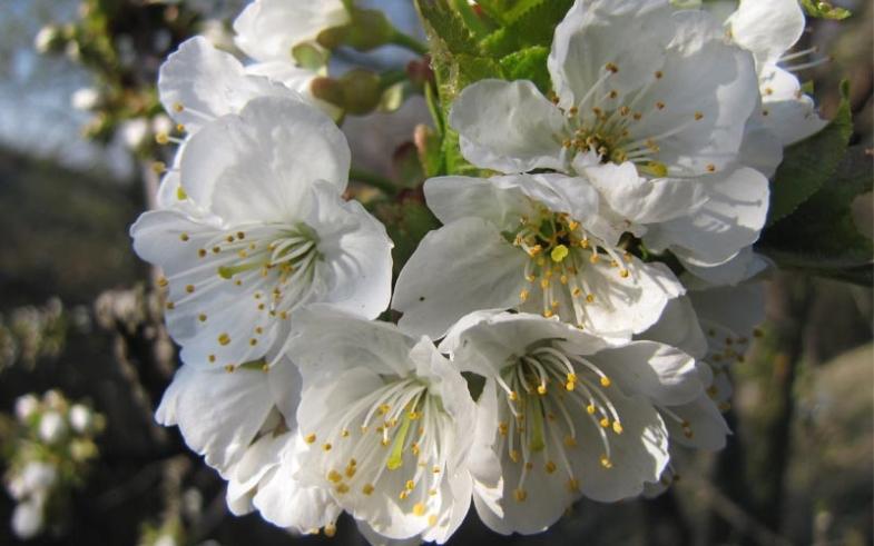 Pomlad 800x500.jpg